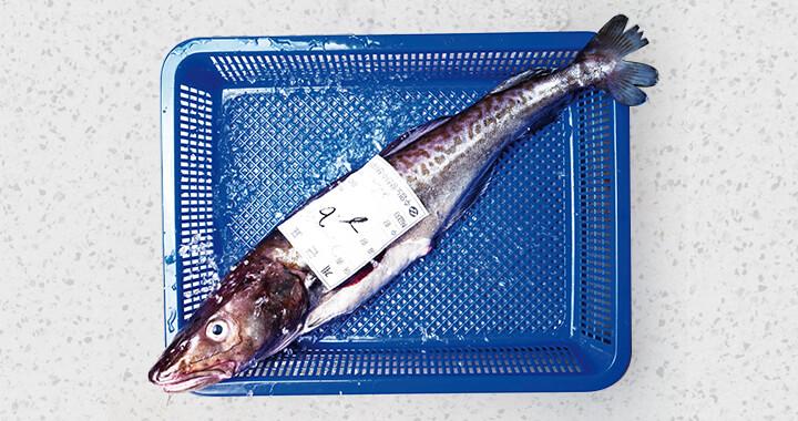 어떤 생선이 과연 신선하고 맛있는 것일까. 셰프의 노하우를 모았다.